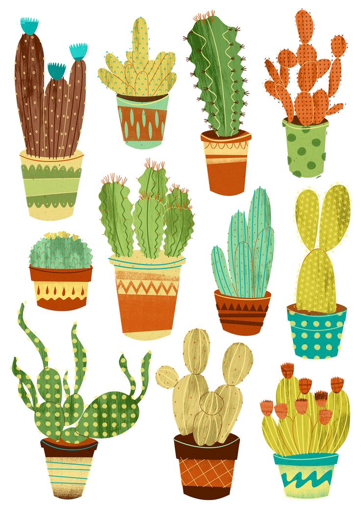 Eleven Potted Cacti