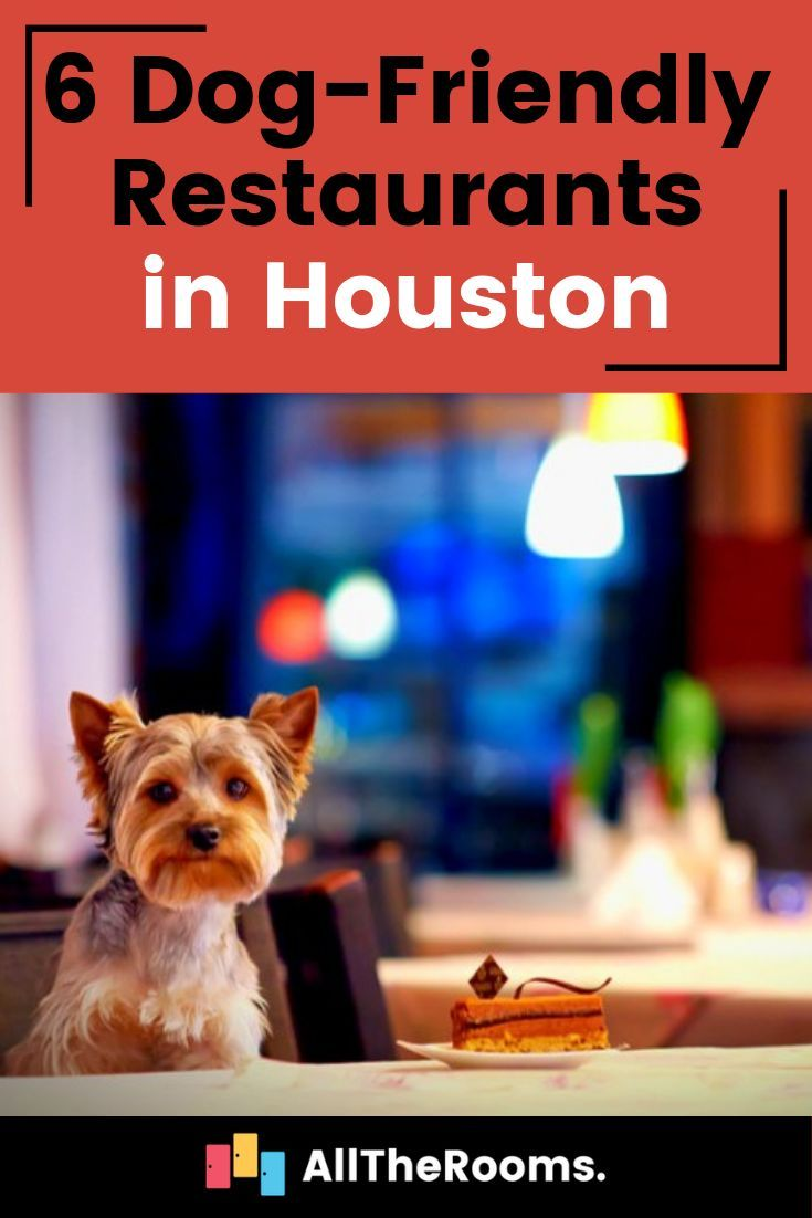 Dog Friendly Restaurants Pet Friendly Vacations Cats That Dont Shed