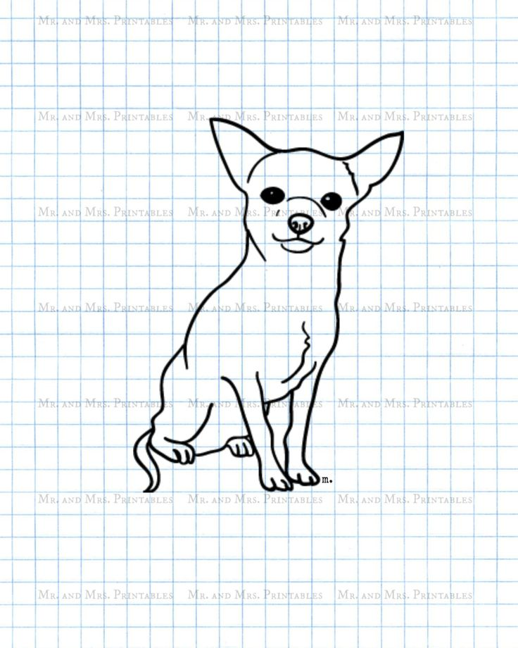 1000 Images About Chihuahua Amp Labs On Pinterest Iris