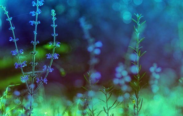 Фото обои цвета, макро, цветы, природа, обработка, растения, зеленые, синие