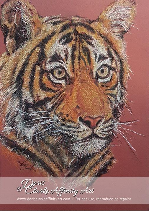 """Tiger Tiger Burning Bright""  Pastel pencil drawing of Tiger on Canson Mi-Teintes paper.  (c) Copyright Doris Clarke."