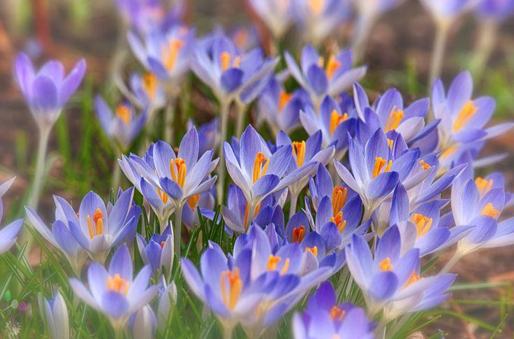 Photographer\'s photo Yury Lugansky - Что, вся эта весна ни к чему?