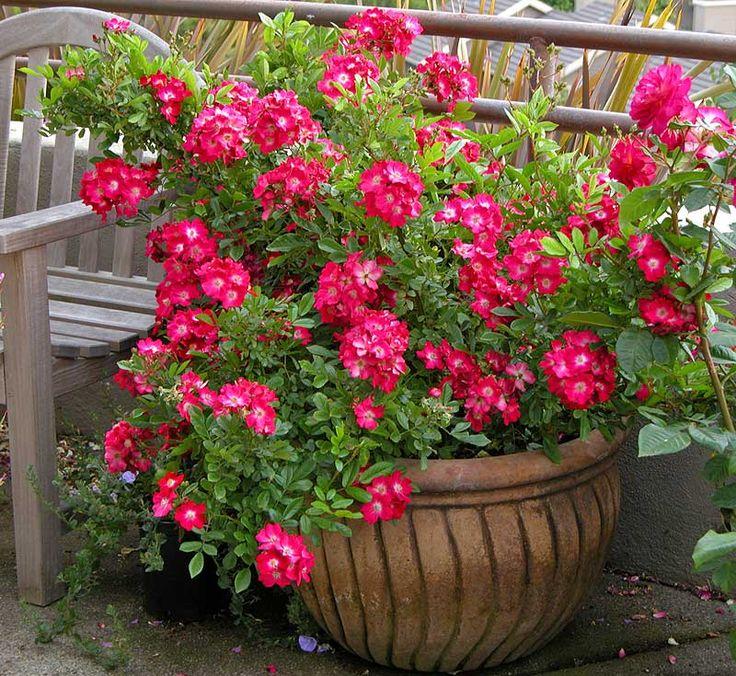 Flowers For Outside Pots: 40 Best Flower Pot Arrangements Images On Pinterest