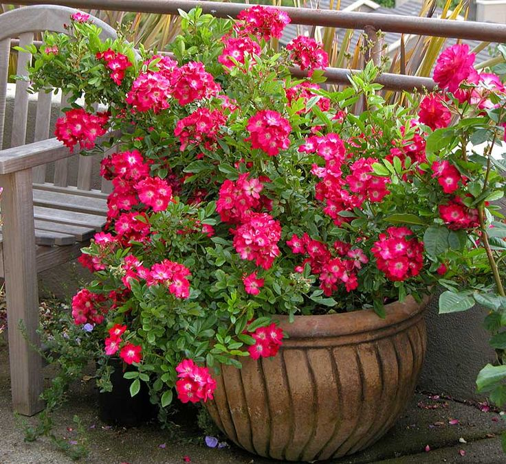 1000 images about flower pot arrangements on pinterest for Garden arrangement of plants