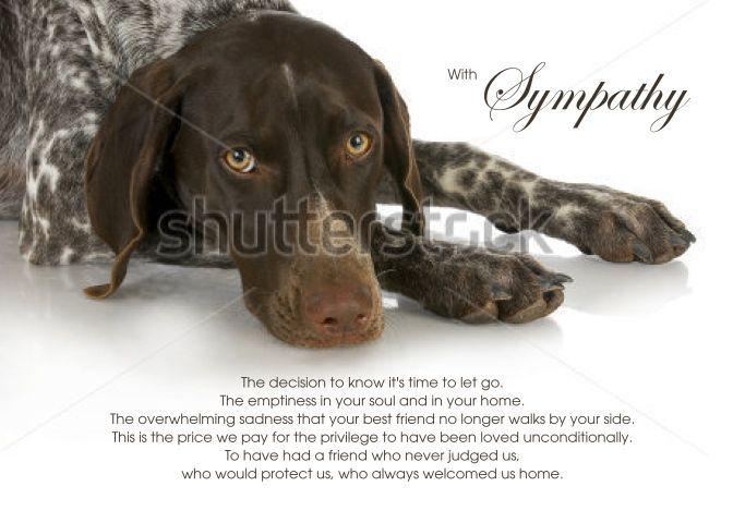 English Pointer Dog Pet Sympathy Euthanasia Card With Images English Pointer Dog Pointer Dog Pet Sympathy