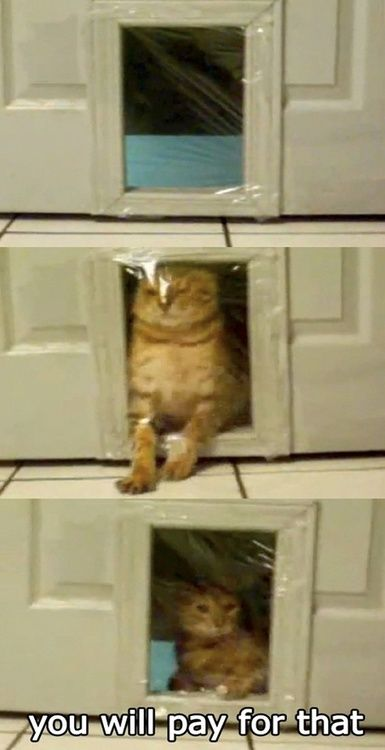 HAHAHA. Cats are jerks, and so are humans.
