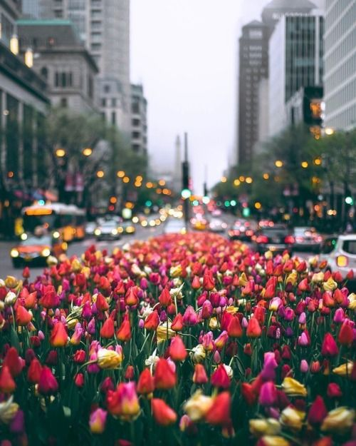 This looks like a New York dream. Flowers in the center of a big city always make them feel a bit cozier!