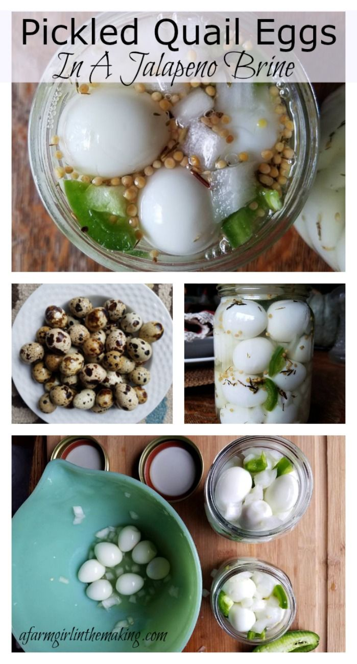 Quail eggs are the perfect bite size high protein snack, and for those of you who have never eaten a pickled egg, this is truly a great egg to start with…not too big, not too small, just right. And it's so easy!