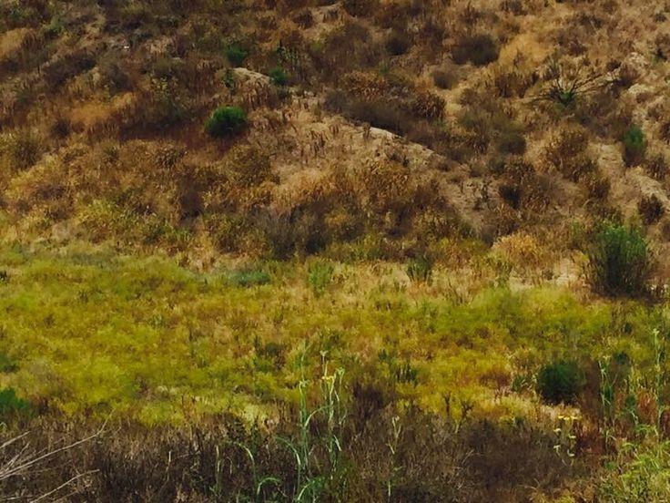 Ballwin Hills Scenic Overview
