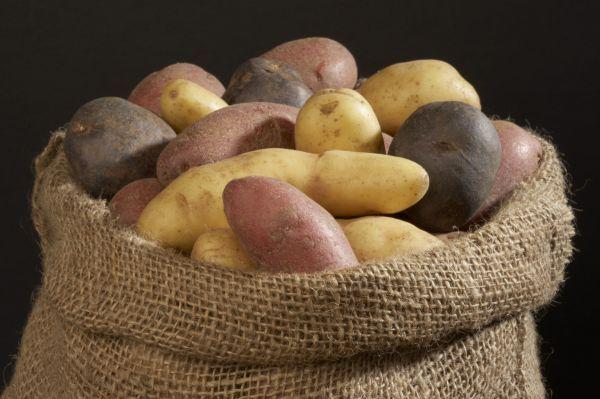 Chcesz zrobić sałatkę? Kup ziemniaki Denar lub Impala. Jeśli jesteś amatorem frytek, wybierz odmianę Irys albo Irga, a gdy masz ochotę na kopytka lub pyzy, zdec...