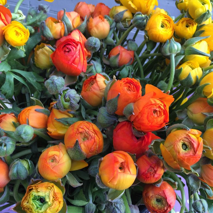 Gorgeous Orange Ranunculus  www.theenchantedflower.co.uk