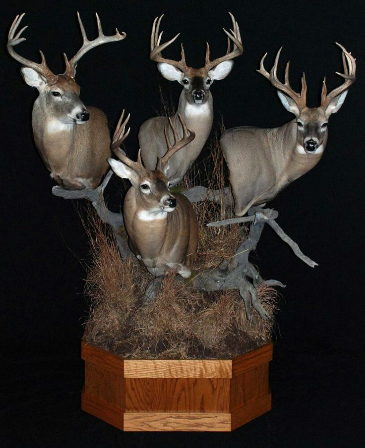 318 Best Whitetail Mounts Images On Pinterest