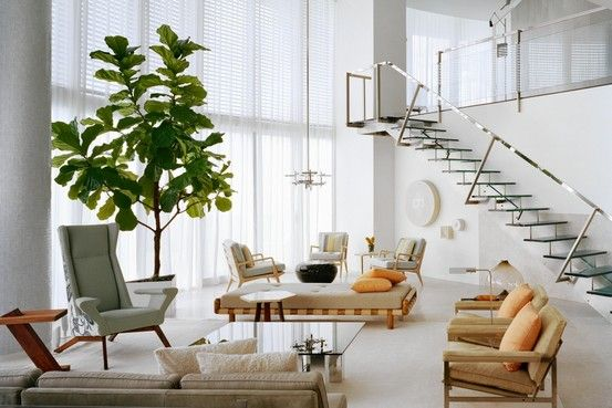 -: Fiddle Figs, Living Rooms, Interiors, Google Search, Wall Street, Indoor Trees, Ficus Lyrata, Figs Trees, Fiddle Leaf Figs