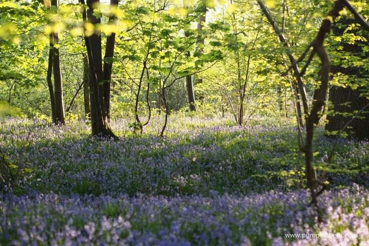 Wonderful Places To See Bluebells in Surrey, Hampshire and Sussex - Pumpkin Beth