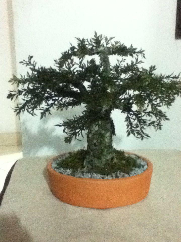 Bonsai artificial de olivo