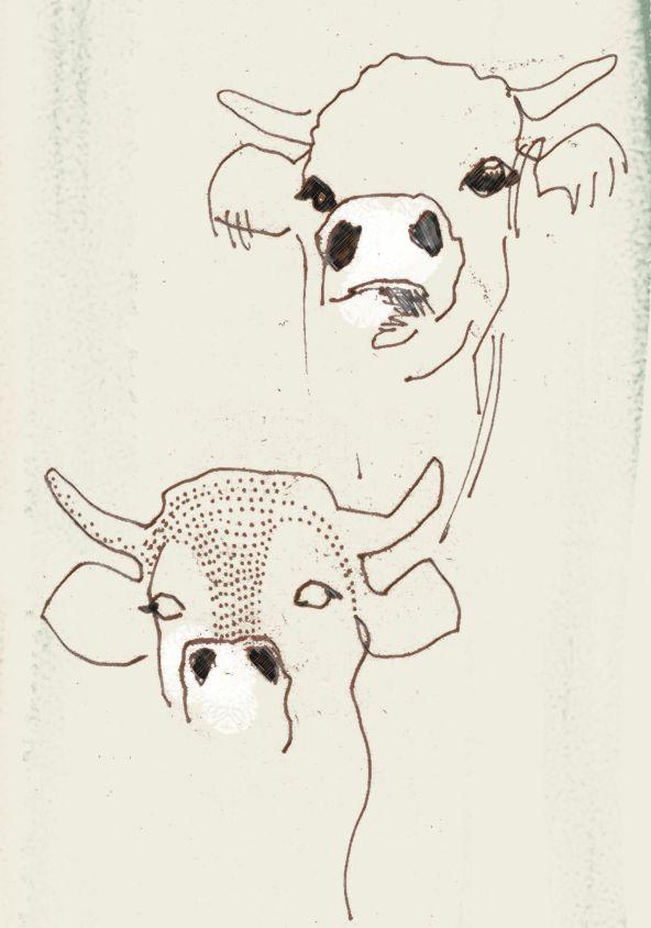 'Cows' by Giulia Benaglia