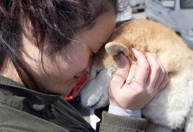 Como lidar com a ansiedade de separação em cães–tratamento