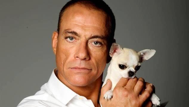 Jean Claude Van Damme Avec Son Chihuahua