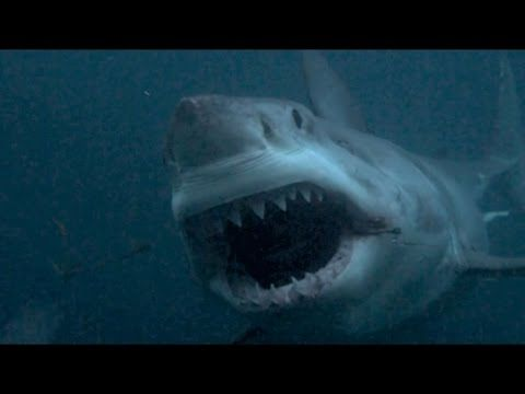 Is Megalodon real? Shark Week debunked I Can't Even Be Mad At The People Who Fell For The Discovery Channel's Lie. They Made It Look True.