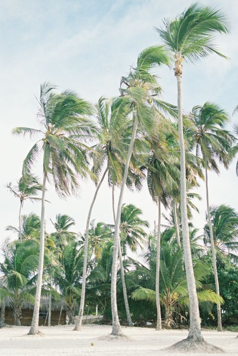 Palm trees on the beach in Dominican Republic. Photography by Heidi Lau.