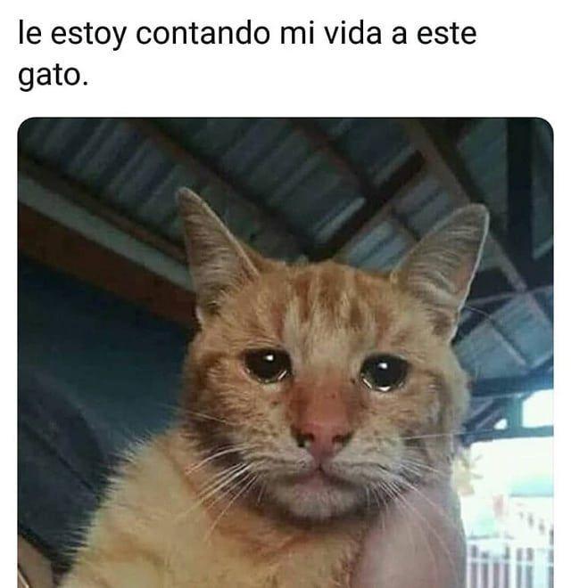 Ven amigos, veamos esta triste historia. #gatitu #Woopy #catstagram #cone …
