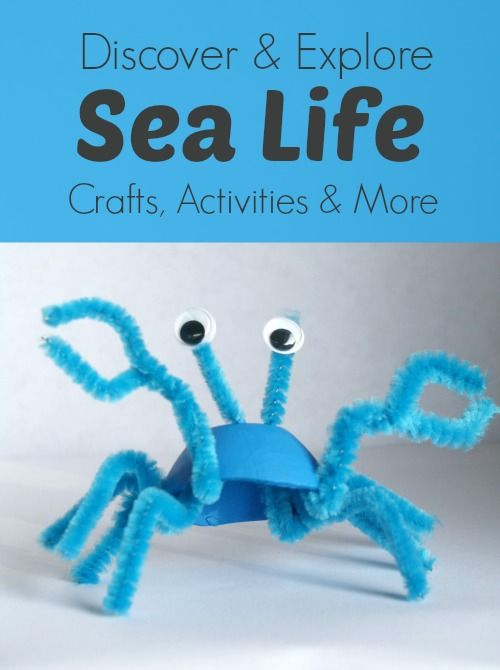 25 best ideas about crab craft preschool on pinterest for Sea life arts and crafts