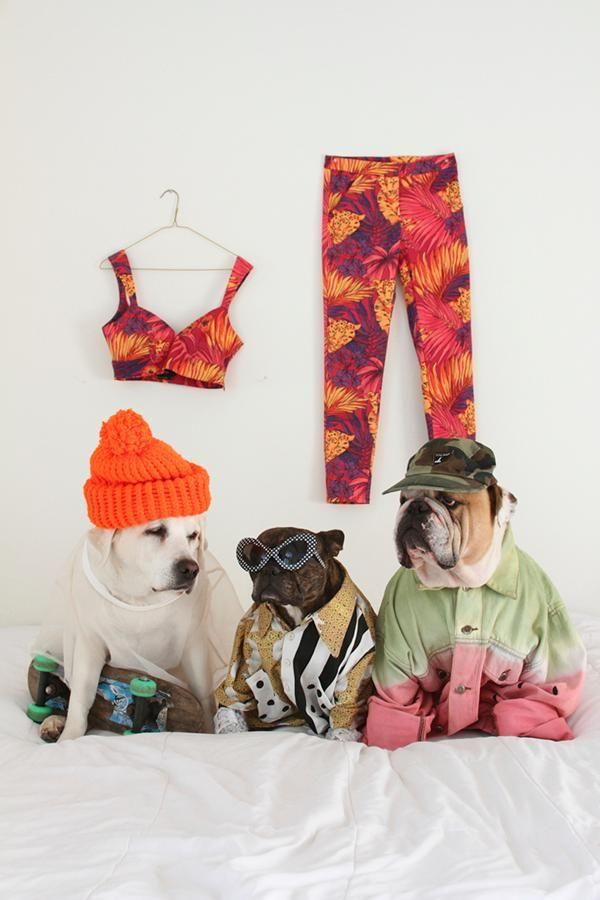 Doggy style. #californiadreamin