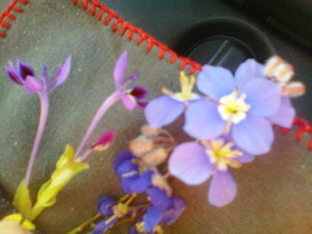 Close up of some wild flowers, just love their colors