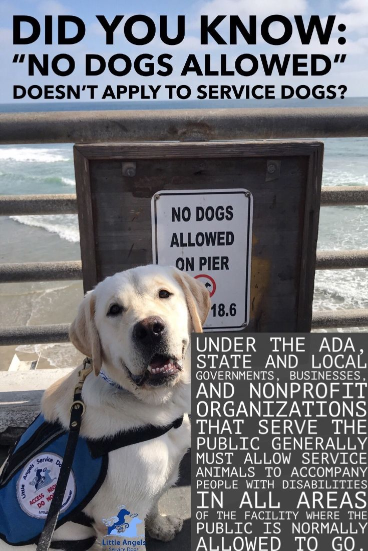 Service Dog Ada Law Did You Know No Dogs Allowed Doesn T Apply