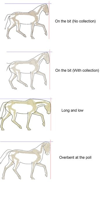 I have certain equestrian friends who should probably learn this.