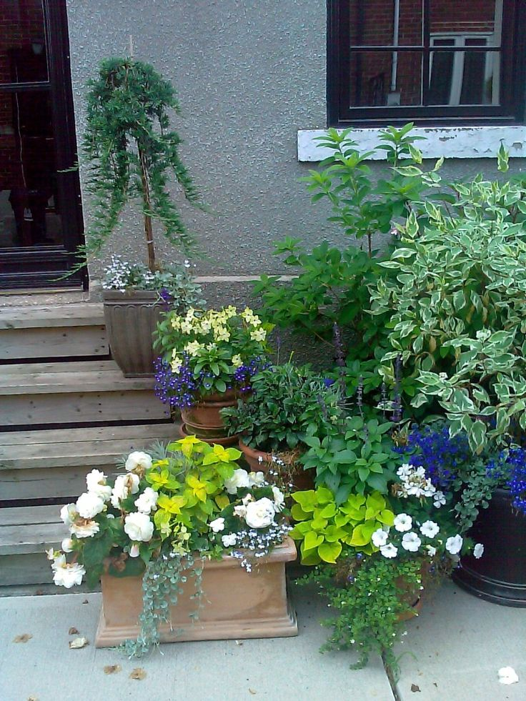 Front porch container gardening ideas Container plant ideas front door