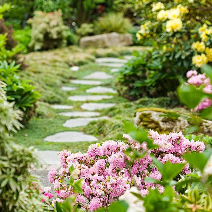 Greet Visitors With Bold Color From Spring Blooming Shrubs Such As Azalea,  Rhododendron,