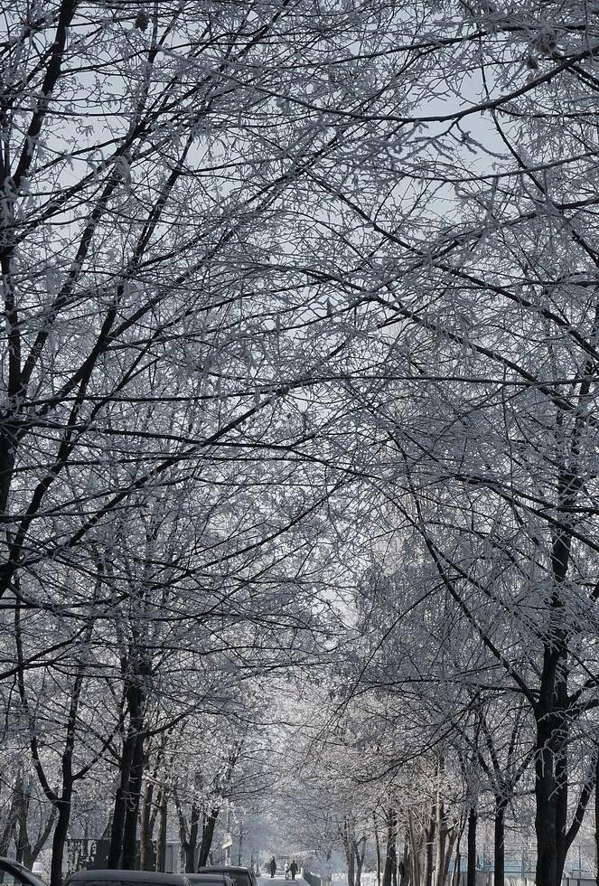 Окно выходит в белые деревья... (с)