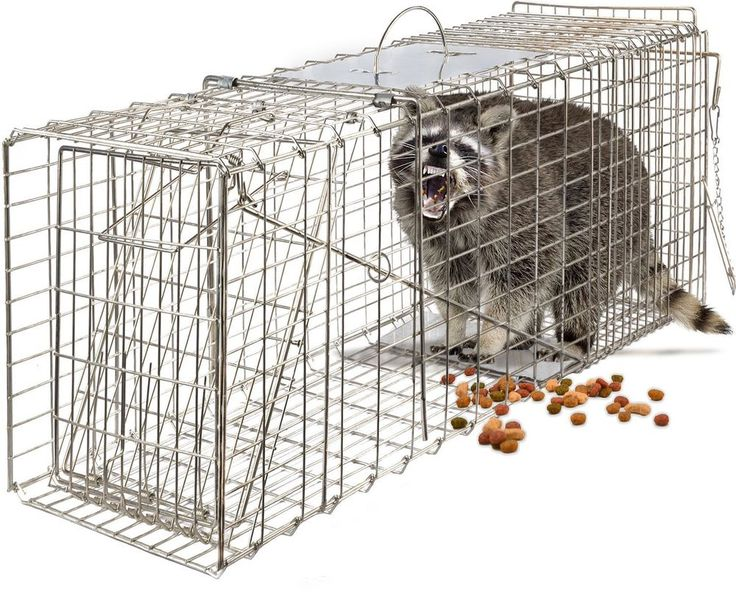 "Live Animal Trap 32"" X 12"" X 12"" Catch Release Humane Rodent Cage Outdoor Grade #OxGord"