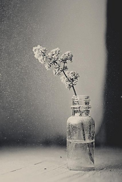 ♂ still life photography simplicity grey: