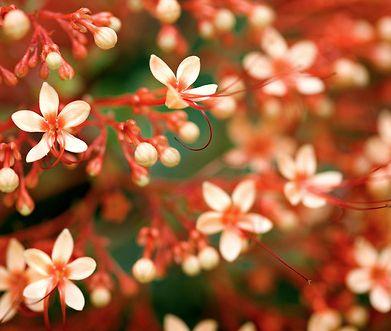 flowers hawaii