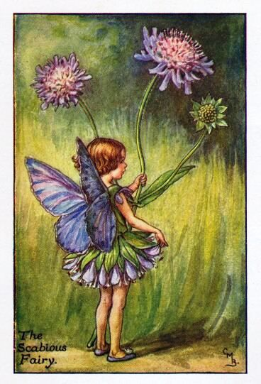 "The Scabious Fairy, by Cicely Mary Barker. The Scabiosa  is a genus in the teasel family. Scabiosa is a Latin name meaning scurfy, mangy, or rough, and/or from the Latin scabies, ""the itch,"" which the rough (scurfy) leaves might have been used to cure. It is also called a pincushion flower, I think because 'scabious flower' is not a very pretty name!"