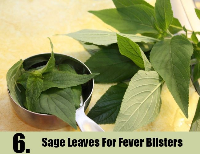 Sage Leaves For Fever Blisters