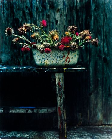 Bright pops of colors in aging wildflowers against weathered wood background with a bluish overtone create beauty and mood at the same time. Shows beauty can be found even in the worn and weathered.