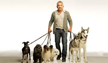 Tips on traveling with pets from the Dog Whisperer, Cesar Millan, courtesy of Best Western.