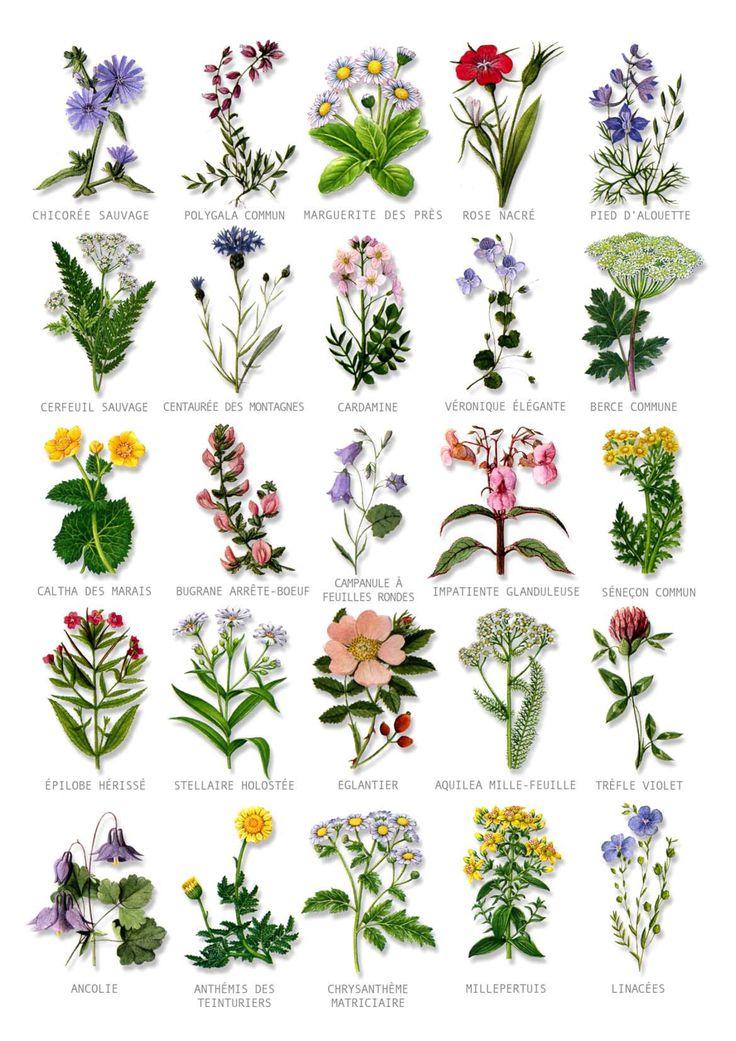садовые цветы в картинках с названиями и описанием чтить