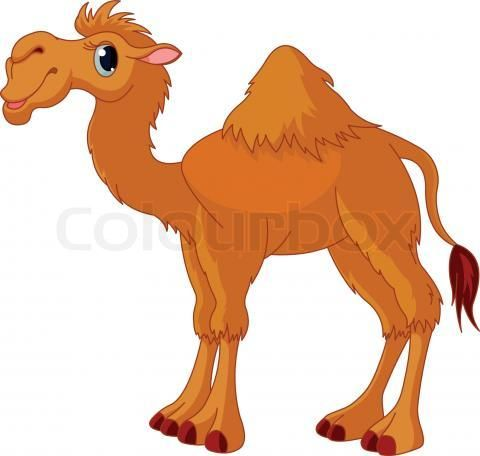"""Funny Camel Photo can be found at this link.  The photo of a """"smiling"""" camel was made in Saudi Arabia by Abdulmajeed Aljuha.  (I couldn't pin the photo, but I changed the link for this camel drawing from Colourbox for the one for the photo.)     http://www.naturephotographers.net/imagecritique/ic.cgi?a=vp&pr=212406&CGISESSID=5024379ece1345d6785760507f700b6a&u=5440"""