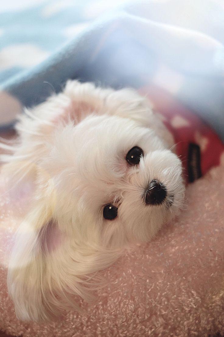 Hello! by Taehun Kim. Cutie!