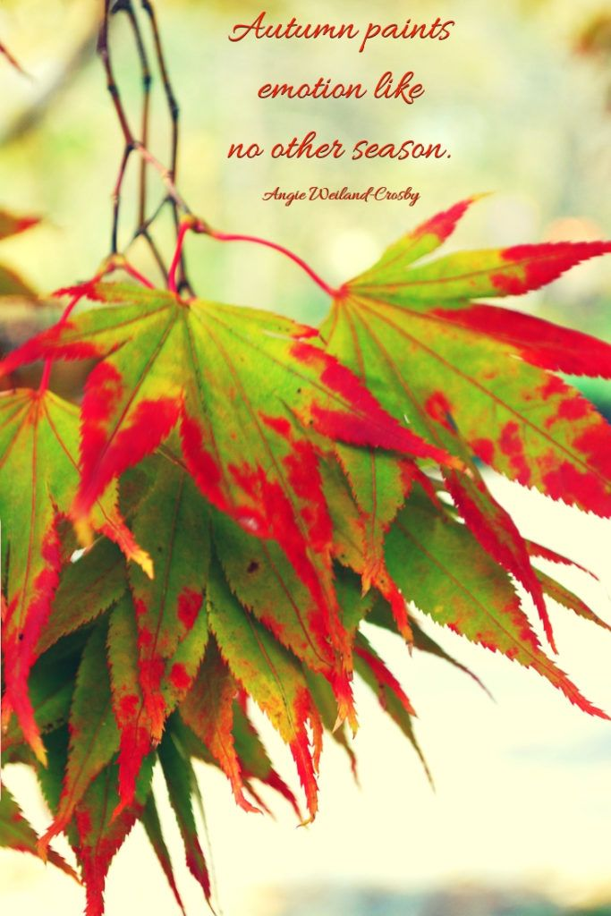 autumn quotes to enchant and deepen the soul autumn painting