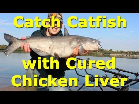 Awesome catfish bait - cured chicken liver on an egg loop knot - YouTube