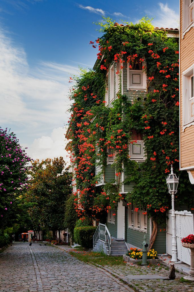 Istanbul: Gardens | Flowers line the houses along the street leading towards Hagia Sophia and the Blue Mosque