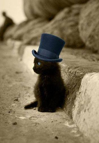 こちらはまだまだ子猫さん。ちょっと背伸びをして、シルクハットをかぶってみたようです。大人になるのが待ち遠しいですね。