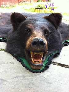 Black Bear Skin Rug.  REALLY?!?!  Kill and animal to have it as a fucking rug?!