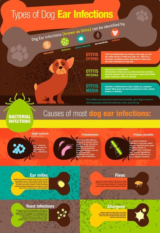 Learn about Dog Ear Infections at http://banixx.com/ear-skin-infections-horse-dog-cat-how-to-treat