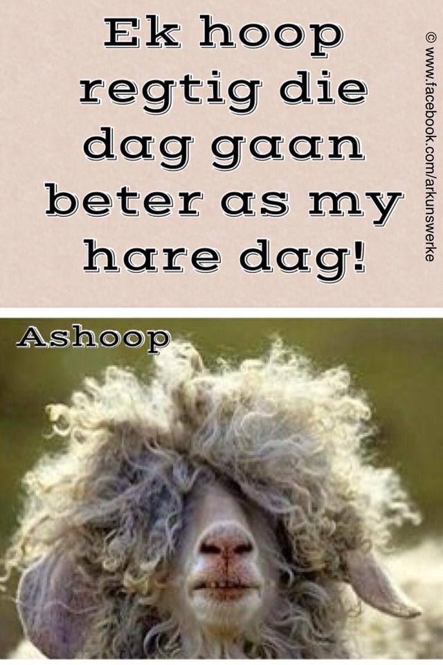 Afrikaans hahaha!